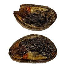 Pteronisculus cicatrosus