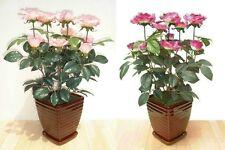 "2 x Rose Bushes - 21"" (53cm) - Artificial Replica Silk Flowers, Imitation Plants"