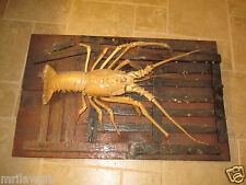 Mounted Florida Lobster Taxidermy Beautiful Real Taxidermy Lobster