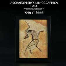 Archaeopteryx LITHOGRAPHICA FOSSIL OFFICE HOME DECORATION ART