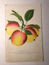 VTG Lithograph Apple Rochester Transcendent Crab Variety of Siberian Seed 1893