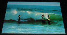 Vintage Postcard  Surfing Longboard Hawaii California