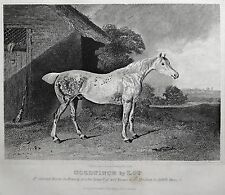 1831 ANTIQUE FARRIER HORSE PRINT ~ GOLDFINCH by LOP