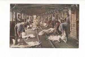 SHEARING TIME Commonwealth of Australia Series VINTAGE  SHEEP WOOL Shearing Shed