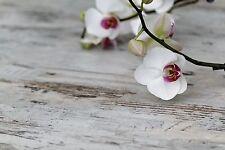 4x Tischsets / Platzdeckchen / Platzset abwaschbar / Motiv 'Orchidee'