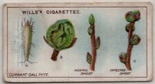 Currant Gall Mite Fruit Plant Pest 100+ Y/O Trade Ad Card