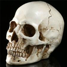Halloween 1:1 Life Size Replica Human Skull Model Resin Realistic Retro Decor RX