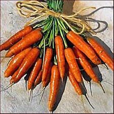 Carrot Scarlet Nantes Vegetable Seeds Pase Garden Pick