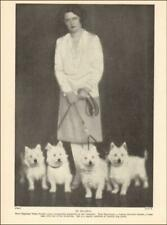 WEST HIGHLAND WHITE TERRIERS, WESTIE DOGS, Bavarian Breeder, vintage 1935