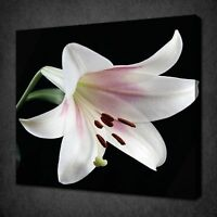 BEAUTIFUL WHITE PINK LILY FLOWER CANVAS WALL ART PICTURE PRINT READY TO HANG