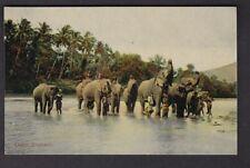 Ceylon ELEPHANTS in river c1900/20s? PPC pub. byPlate & Co
