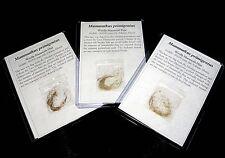 Pleistocene ice age Mammoth hair Mammuthus from Siberia Permafrost fossil
