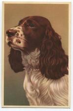 Vintage English Springer Spaniel Dog Lithograph Art Print Postcard Belgium