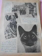 Attila fléau des rats Chat Siamois 1er prix expo de Londes Print 1936