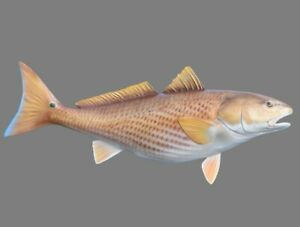 "Sport Fish Replica - 29"" Redfish Wall Mount - Gorgeous!!"