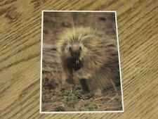 Porcupine at Devils Tower National Monument Postcard (FC1-4)