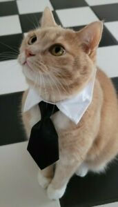 Dog Cat Animal Cute Black Tie Collar Pet Adjustable Neck Tie US Ship