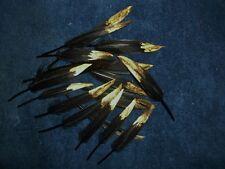 Eagle, Hawk, Owl Turkey, Feather 24 pcs. dipped antique gold