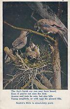 ADVERTISING: Nestle's MILK-Animals & Birds  -The Jay
