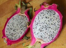 Enana roja Dragon Fruit – Pitaya-realmente uno de Dios De La Maravillas! 10 mejores semillas