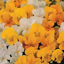 Viola Sorbet Citrus Mix Annual Seeds
