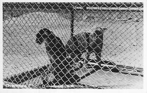 Cherokee Zoo, Carlsbad, N.M., RPPC!, Cline