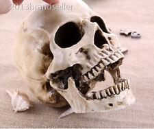 White Life Size Fine Arts Realistic Replica Human Head Skull Home Statue
