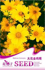 Original Package 50 Big Flower Coreopsis Seeds Coreopsis Grandiflora Flower A187