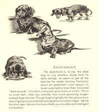 4 Dachshund - Vintage Dog Print - 1946 Dennis