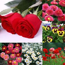 29+ Annual Flower Garden Seeds Veronica Polita Daisy Rose Peony Free Shipping