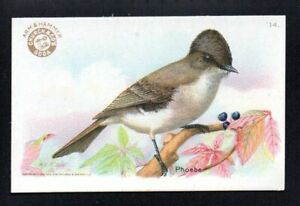 PHOEBE 1922 3RD SERIES small ARM & HAMMER USEFUL BIRDS OF AMERICA #14 EXMT/NM