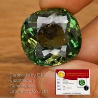 Huge Rare! 63.41ct 24.6x23.5mm Cushion Natural Unheated Green Apatite *Certified