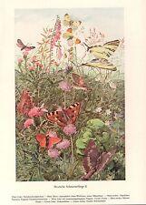 Deutsche Schmetterlinge II Segelfalter Kleiner Fuchs Großer  Farbdruck 1953