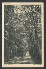 Op de Veluwe  Fraaie bosweg