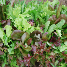 Mesclun Mix Seeds USA Garden Vegetable Spring Mix Lettuce Salad Seed for 2020