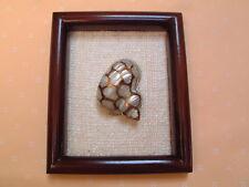 Kunstobjekt - shell arts - Turbo Argyrostomus - Schnecke - gerahmt 13,5 x 16 cm