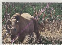 CPSM AFRIQUE AFRICA FAUNE ANIMAL RHINOCEROS Edt CARTE AFRICAINE