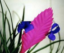 """Plant Hawaiian Pink Quill Exotic Tillandsia 4"""" Pot Live Garden Indoor Outdoor"""