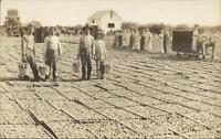 Likely California Drying Peaches Farmers Agriculture c1910 Real Photo Postcard