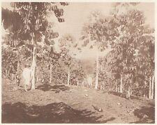G0613 Insulinde - Arbres à caouthouc à Java -  - Stampa d'epoca - 1926 Old print