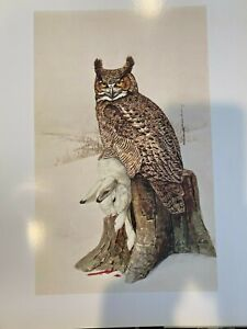 "Louis Agassiz Fuertes & The Singular Beauty of Birds, ""Great Horned Owl"" Print"