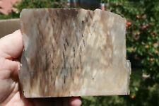 Petrified Palm Wood Piece