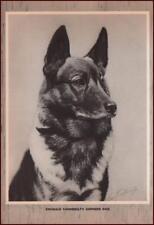 GERMAN SHEPHERD DOG, Reginald Vanderbilt Owner by George Ford Morris, 1952