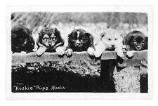 """Huskie"" Pups in Alaska B&W RPPC Postcard Dogs"