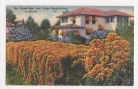 USA, The Flame Vine & Purple Bougainvillea in Florida Postcard, B241