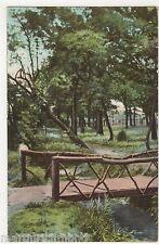 Norbury Topse Surrey, The Rustic Bridge Postcard, B505