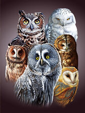 Cute Owls Lenticular 3D Picture Animal Poster Painting Home Decor Wall Art Decor