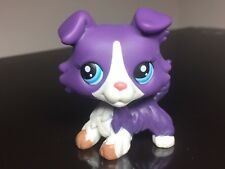 Littlest Pet Shop Collie Dog #1676 LPS Purple White Blue Eyes USA Seller