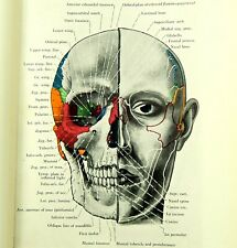 More details for 300 x vintage 1930s anatomy plates human body surgical medical surgery diagram a