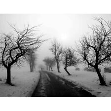 Nature Landscape Black White Snow Winter Tree 12X16 Inch Framed Art Print